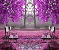 Come sit with me under the Jacaranda